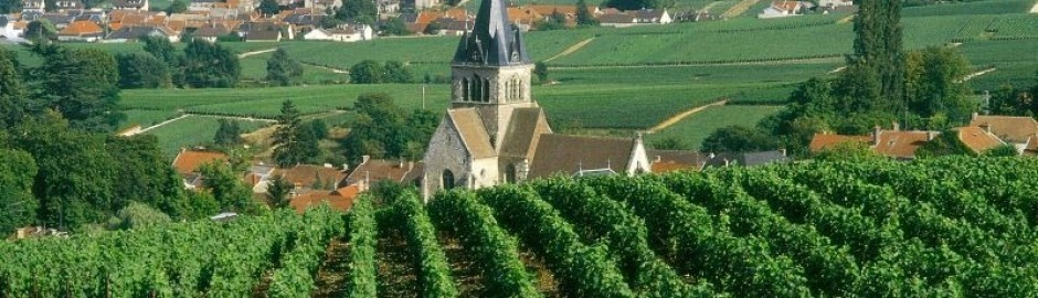 Champagne tour from Paris, Champagne tour