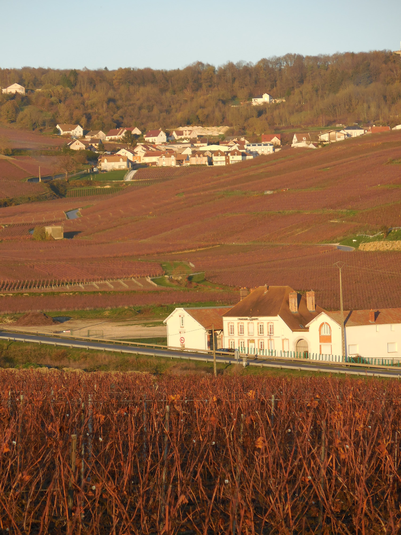 producteur local de champagne, vignes