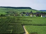 guided tours, champagne day tour
