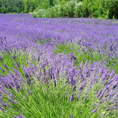 Provence, Lavender, places to visit in France