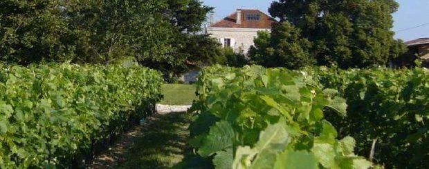 saint-emilion, bordeaux wine trip,