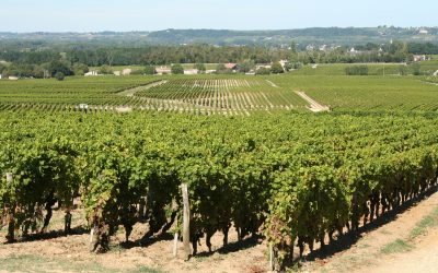 graves sauternes, bordeaux wine trip