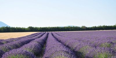 valensole, provence in 5 days