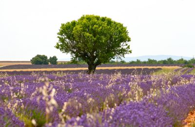 provence in 5 days