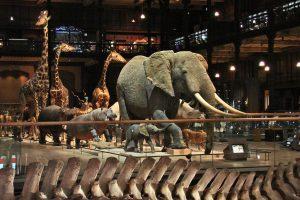 The Museum of Natural History of Paris, Paris Museums