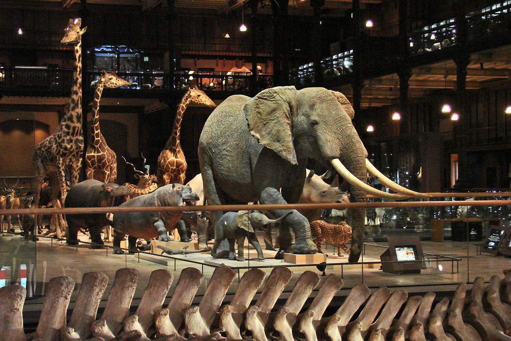 The Museum of Natural History of Paris, Paris Museums, paris museums list