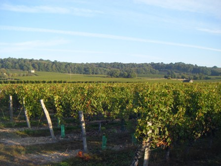 Loire Valley wine tasting
