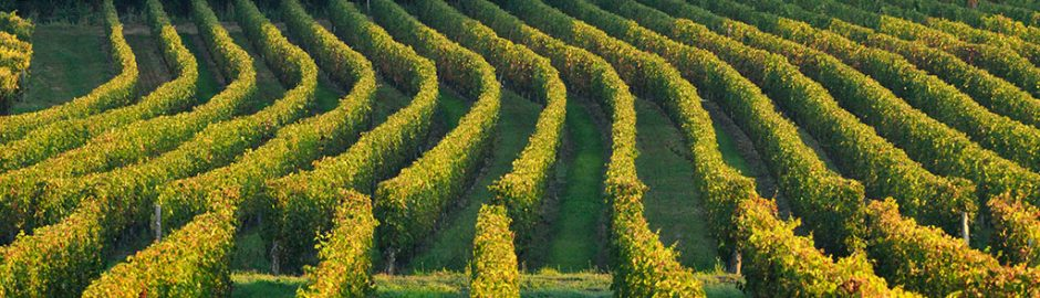 Loire valley vineyards